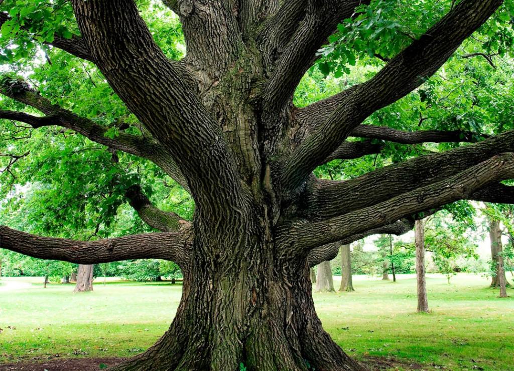 Career-Path-Like-Climbing-Tree